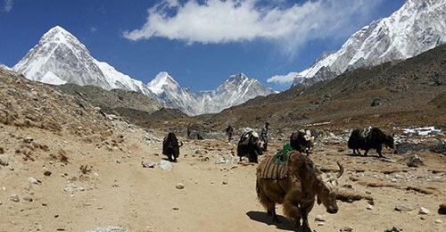 Эверест. Базовый лагерь Эвереста (E.B.C.)| Лёгкий треккинг в Непале. Треккинг в Непале. Базовый Лагерь Аннапурны