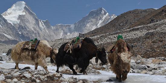 Непал. Треккинг в Непале.