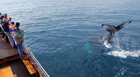 Автотур по Исландии. Исландия на машине. Акурейри. Исландия киты.