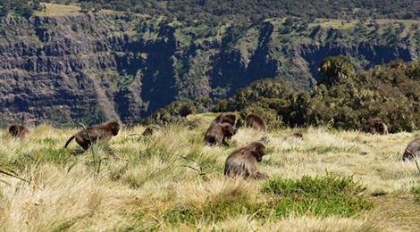 Сердце Африки | Путешествие в Эфиопию. Simien Mountains National Park