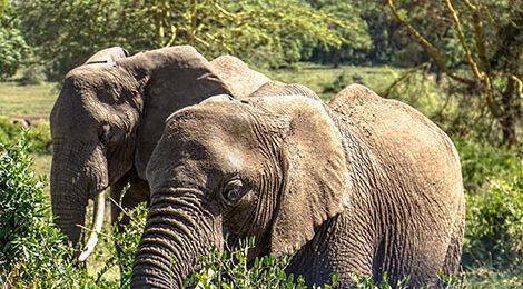 Восхождение на Килиманджаро. Кили. Тарангире. Нгоронго. Сафари. Занзибар. Танзания