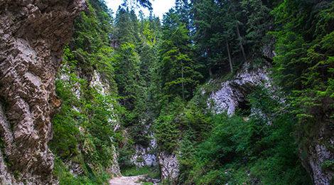 Южные Карпаты. Поход в Румынии. Румынские Карпаты. Поход по Румынским Карпатам. Каньон Зарнестелор
